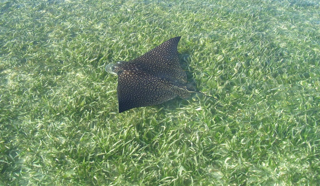 The Ocean Foundation: SeaGrass Grow | Conservation Media Group